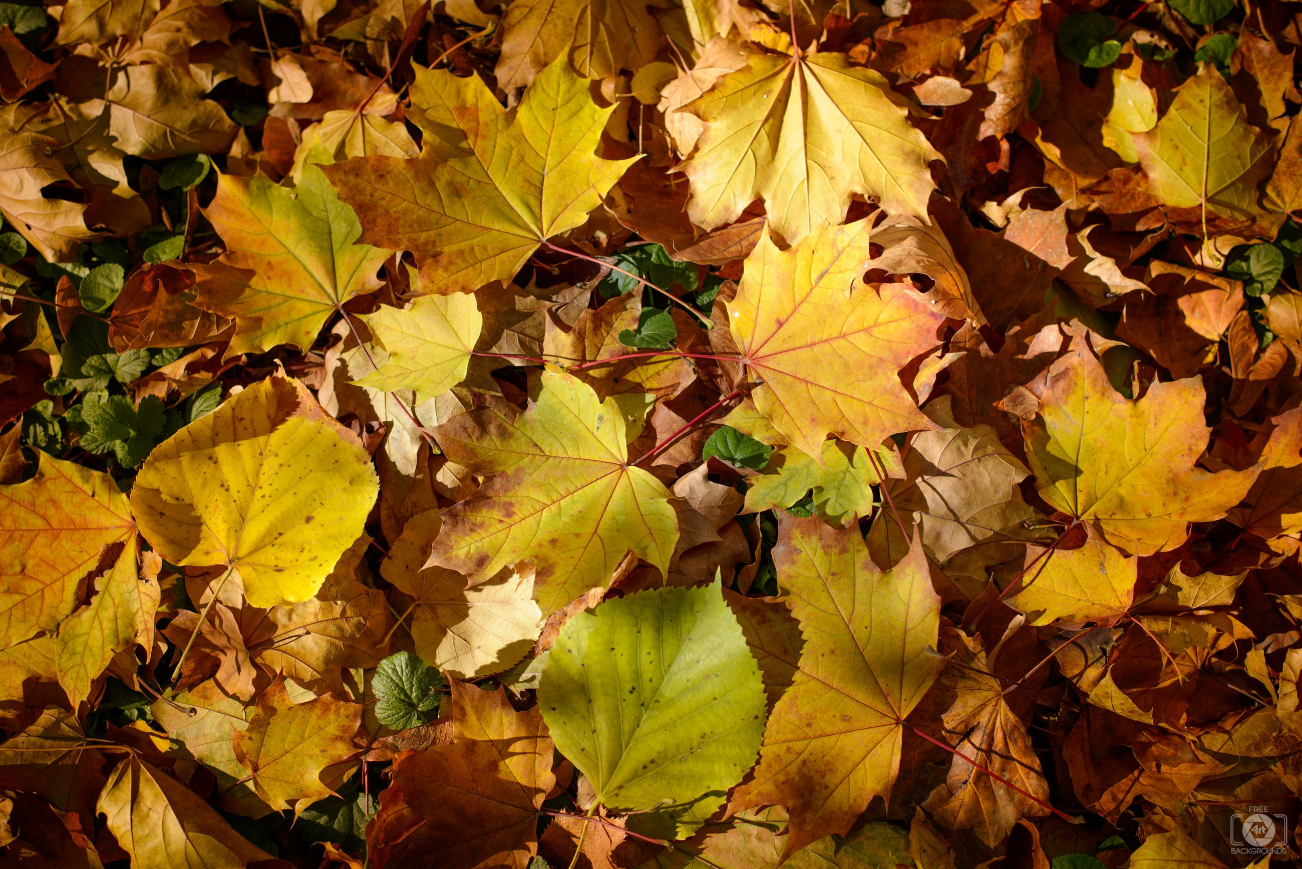 Fall_Leaves_on_the_Ground_Background-627